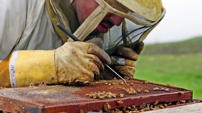 10 milhões de colmeias, no valor de US $ 2 bilhões, morreram nos últimos seis anos nos EUA