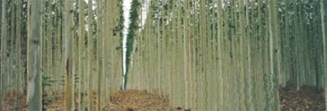 CartaGMtrees