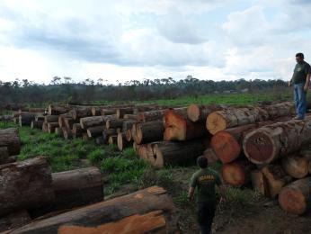 madeira-sul-amazonas-Ibama2
