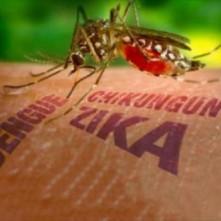 zika-etc-e1447861290101