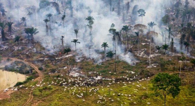 gado-amazonia-desmatamento-9-750x410