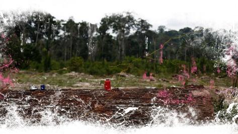 ilegal logging 1