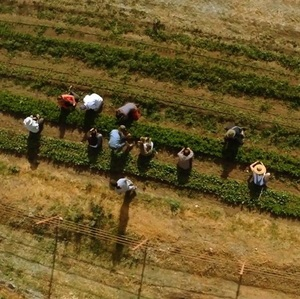 food_tank__a_man_in_the_maze