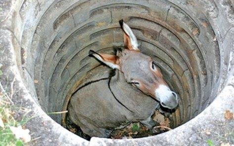 Resultado de imagem para caveira de burro