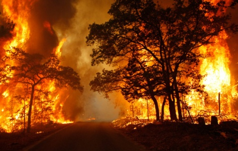 Higher-Than-Average-Temperatures-Up-Forest-Fire-Risk-in-the-Amazon-2