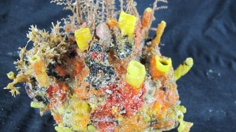 recife de coral