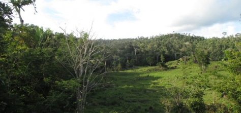 border-of-area-of-redd-project-2-apaisada-768x362