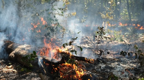 action-sn-blog-forest-burning-brazil