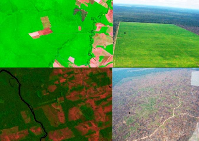 deforestation prodes