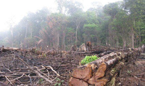amazon-deforestation01