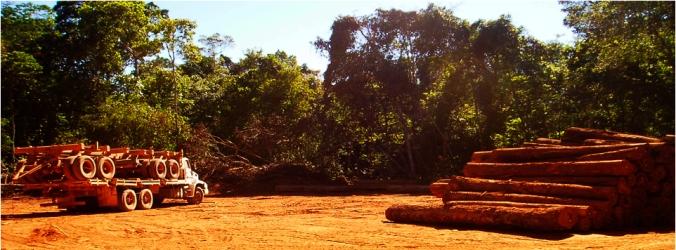 logging patio