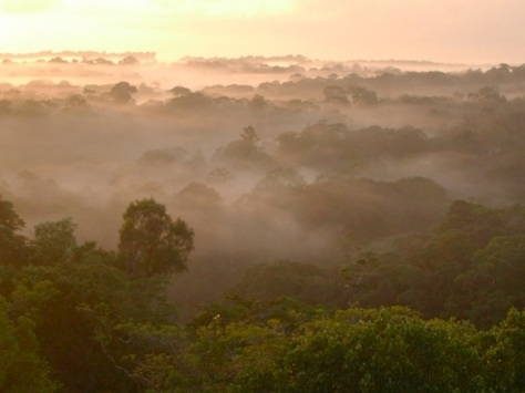 rainforest_fog_clouds_dawn_580