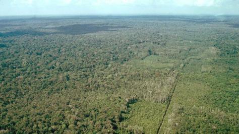 Floresta de Transição