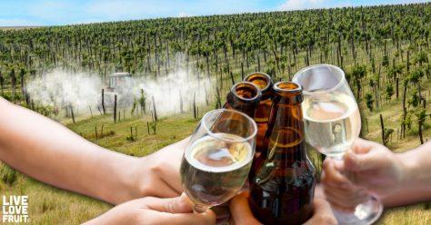 glyphosate-in-wine-and-beer-1024x536