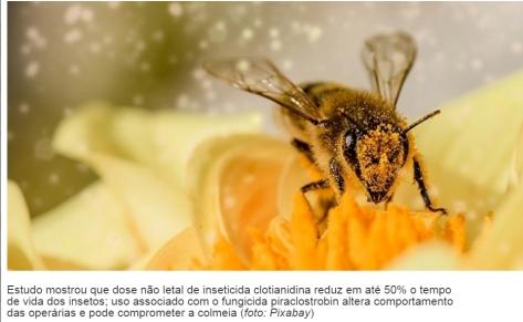 abelhas fapesp