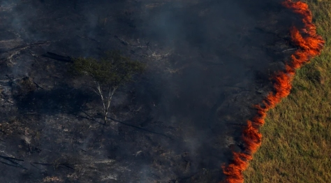 amazonia arde