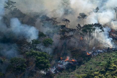 amazonia desmatamento 1