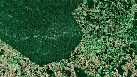 para deforestation