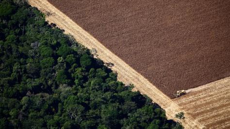 soja desmatamento