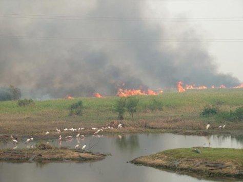 queimada pantanal