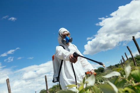 Man spraying toxic pesticides or insecticides on fruit growing plantation. Natural light on hard sunny day. Blue sky with clouds in background.