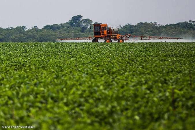 Soya Plantation in the Amazon Plantação de soja na Amazônia
