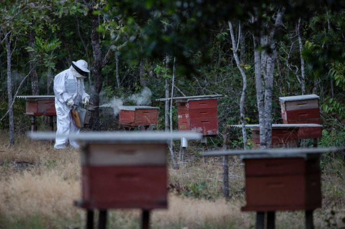 Beehives in the Cerrado Biome, Brazil Comunidades e cultura do Cerrado
