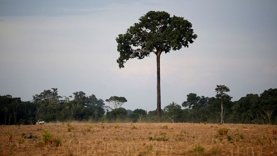 The Wider Image: Brazil's Amazon guardians