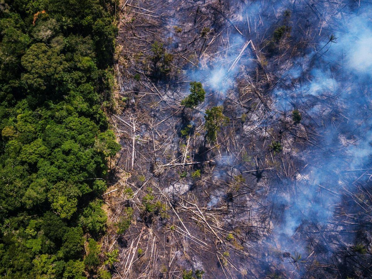 Amazon-Deforestation-2
