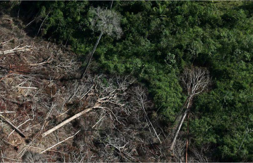 União-Europeia-desmatamento-810x522