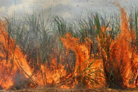queimadas