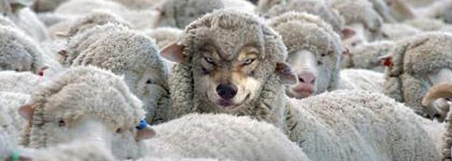 as-ovelhas-e-o-lobo