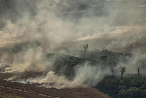 Deforestation and Fire Monitoring in the Amazon in July, 2020 Monitoramento de Desmatamento e Queimadas na Amazônia em Julho de 2020