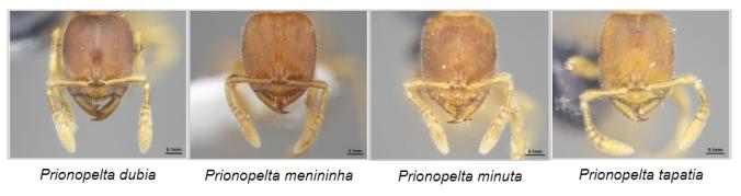 formigas,