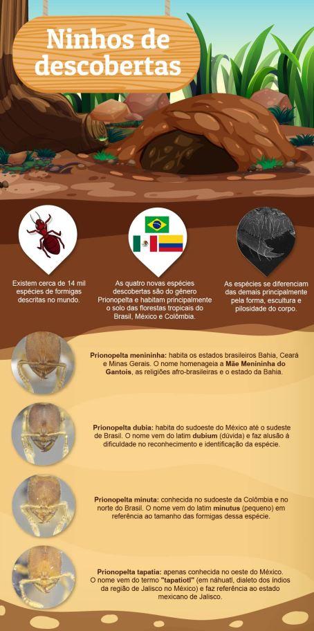 infografico-formigas-Prionopleta_Juliana-Barbosa-Aspec-UFPR_