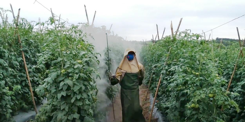 agrotóxicos tomates