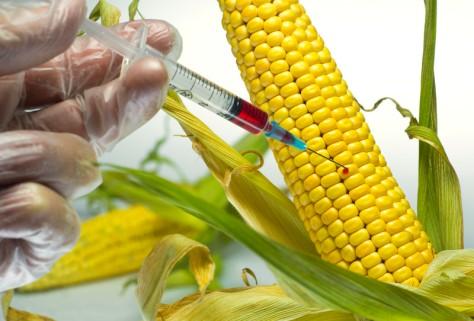 Illustration for GMO