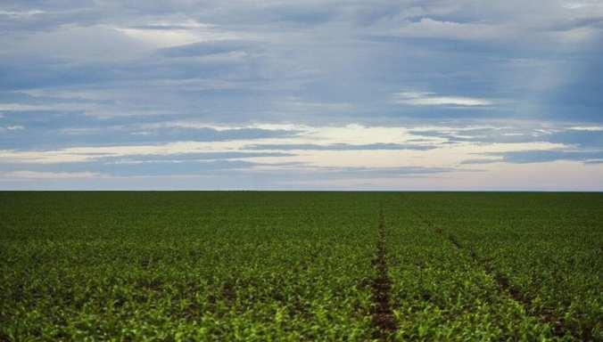agricultura-deforestacion1-996x567