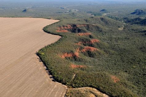 cerrado-desmatamento-ciclovivo