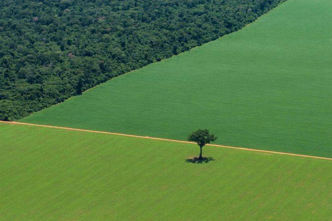 Greenpeace-lonely-tree