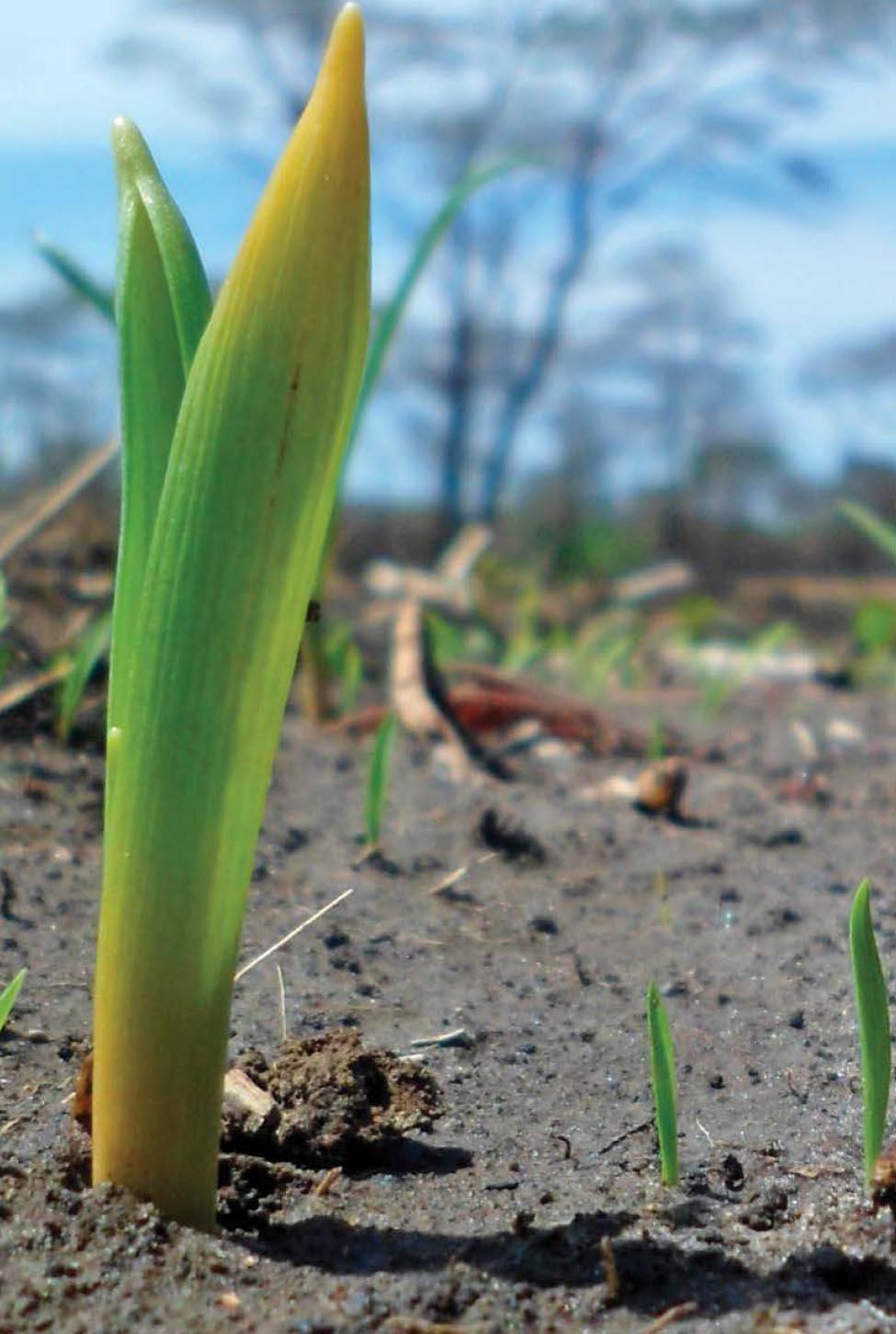 soil seed