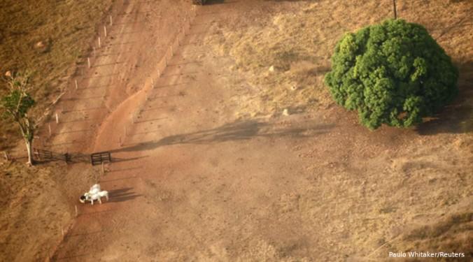 tc desmatamento
