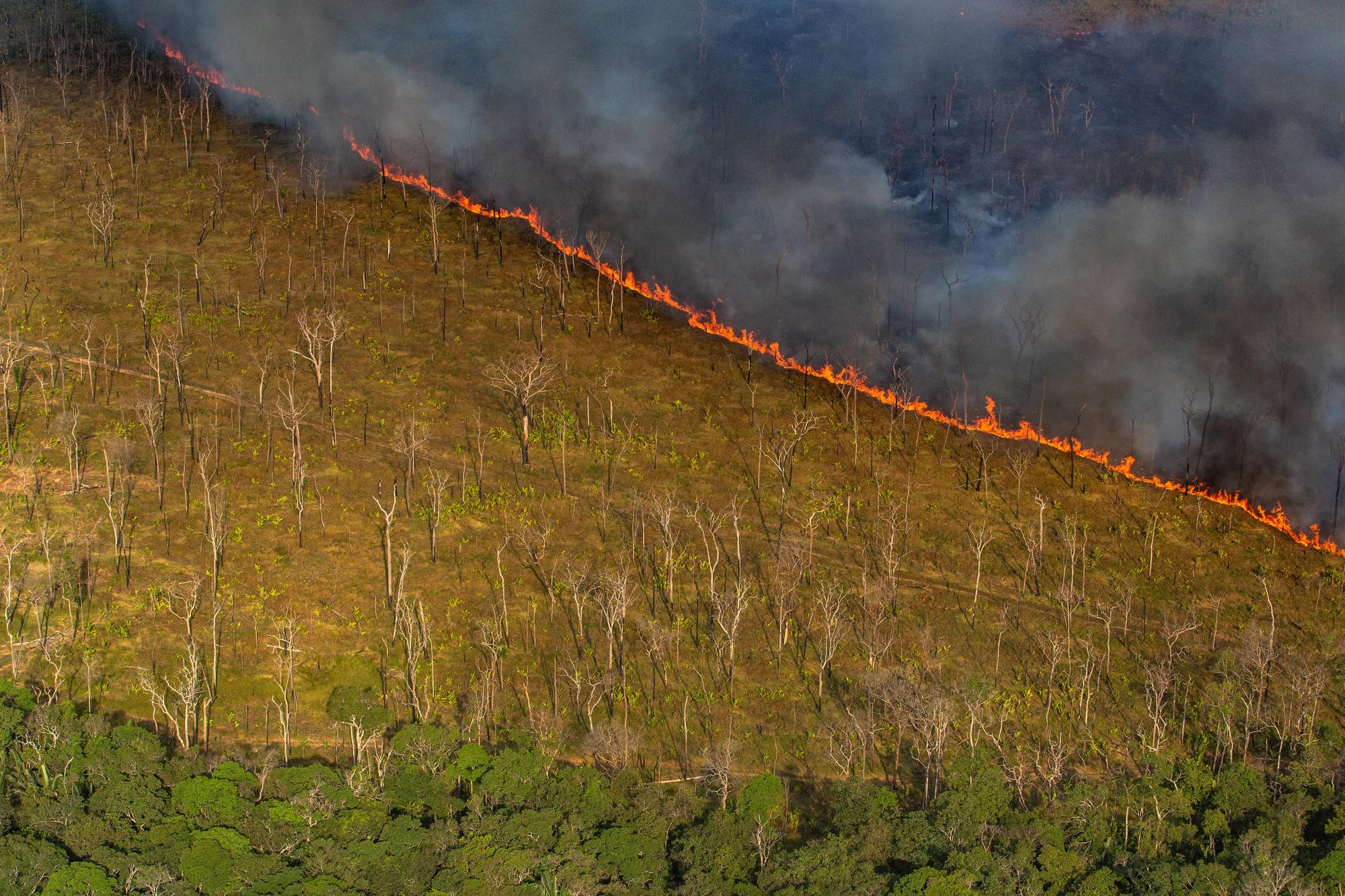 A stretch of the Amazon rainforest is deliberately burned for cattle pasture in Brazil's Rodonia State, Sept. 8, 2019. (Victor Moriyama/The New York Times)