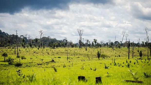 amazonia 2030