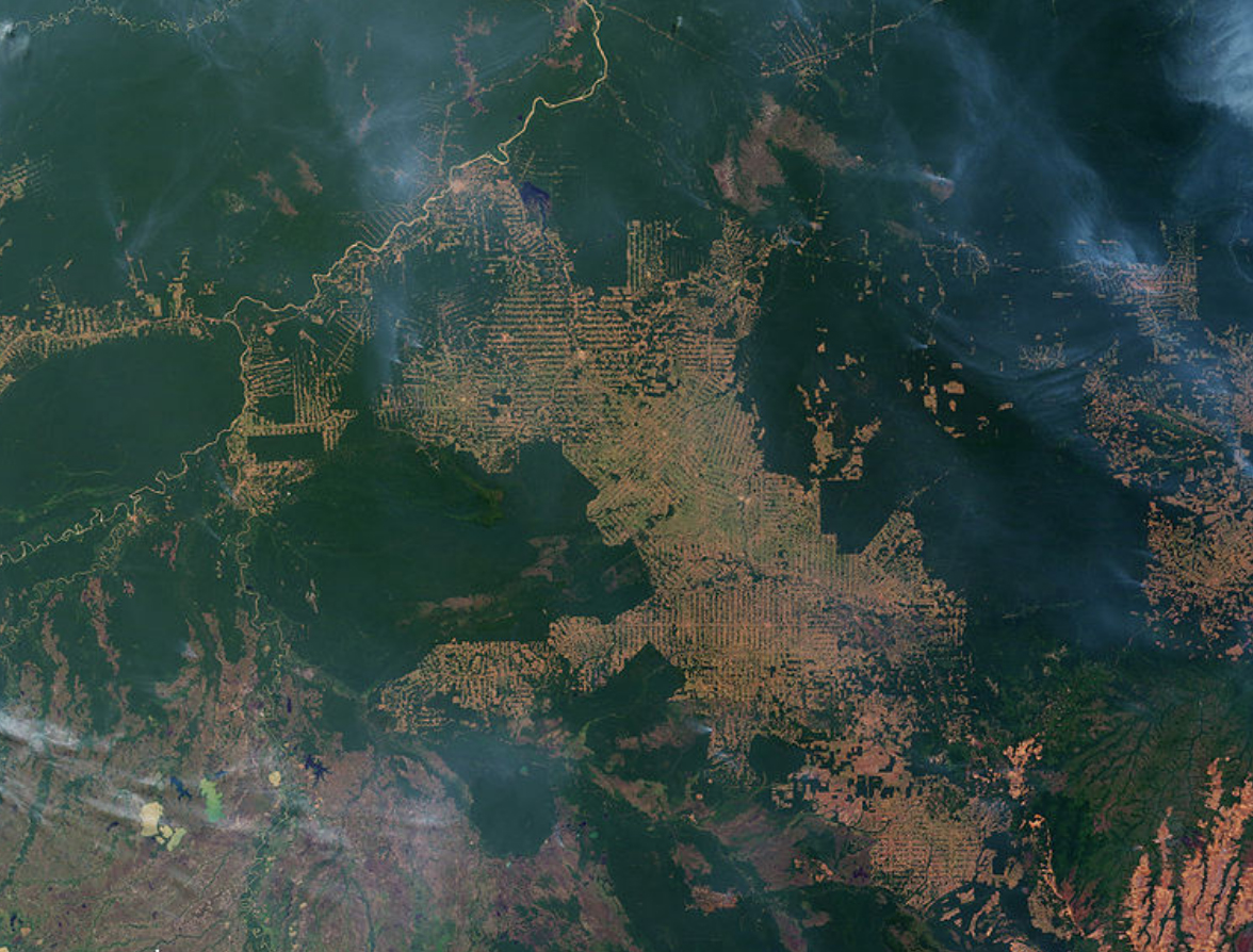 destruição amazonia