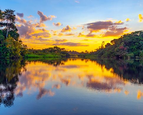 amazonia sunsey