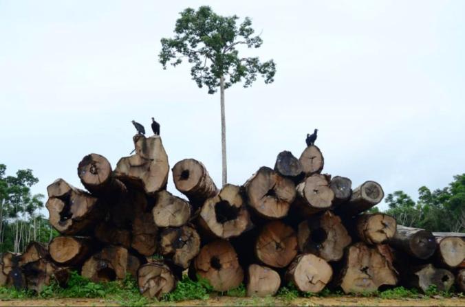 madeira mt