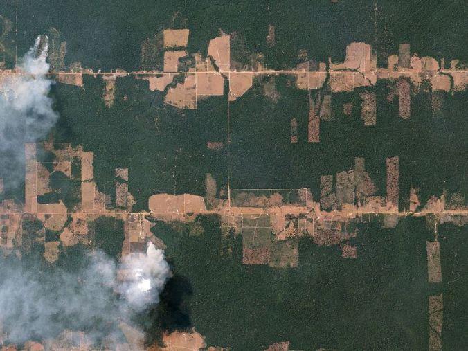 Fishbone_Deforestation__Rondônia__Brazil_by_Planet_Labs