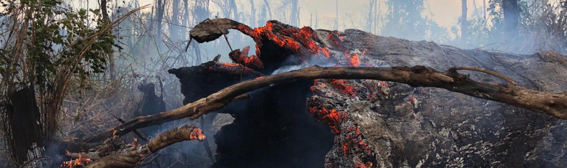 tronco queimado